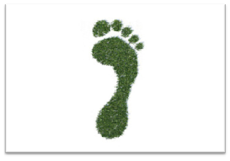 What's the difference between our Ecological and our Carbon Footprints