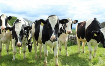 Dairy farmers can soon trade energy via virtual microgrid