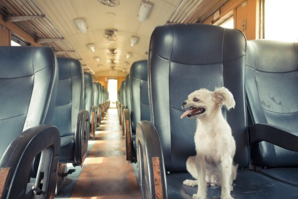 Five Tips to Help Select the Best Route When Transporting Your Pet